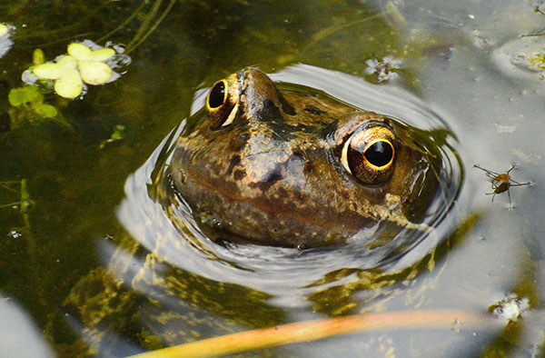 'Frog' by Peter Marrs of Droitwich Spa & District U3A