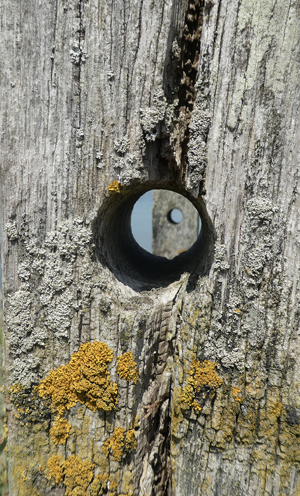 'Hole' by Angela Stephens of Fleet & District U3A