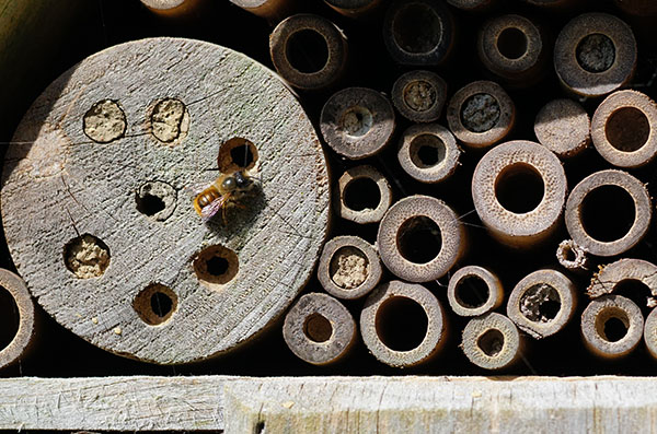 'Red Mason Bees' by Terry Waldron of Spire U3A